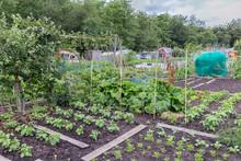 Allotment Garden In Early Spri...