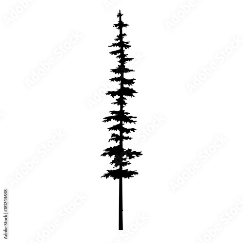 Fototapeta tree pine silhouette vector illustration, isolated silhouette of a coniferous tree. Can be used in design, illustration, tattoo. obraz