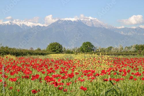 Der Olymp im Frühling, Mount Olympus, Greece #181244632