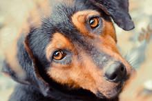 Stray Dog Close Up