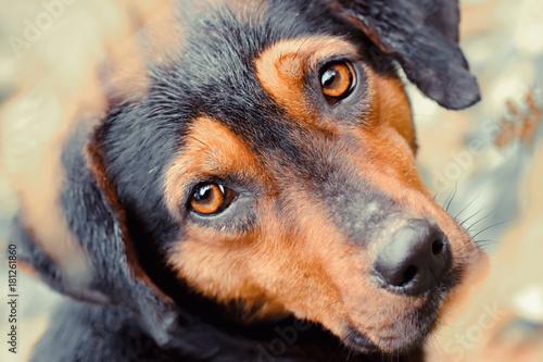 Foto  Stray dog close up