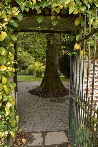 arbre derrière la porte grillagée du mur d\'enceinte du jardin de l ...