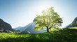 Leinwanddruck Bild - Idyllic landscape in the Alps, tree, grass and mountains, Switzerland