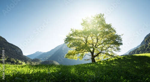 Staande foto Blauwe hemel Idyllic landscape in the Alps, tree, grass and mountains, Switzerland