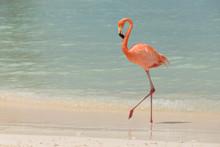 A Flamingo Walking On A Tropical Beach