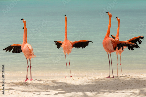 A flamboyance of flamingos spreading their wings Canvas-taulu