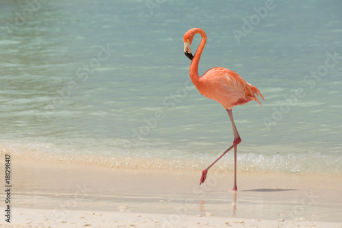A flamingo walking on a tropical beach
