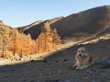 The Dog Explorer On The Mounta...