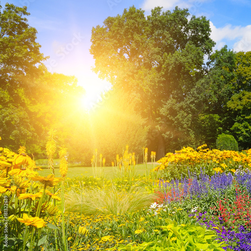 Poster Jaune summer park with beautiful flowerbeds