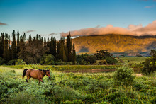 Horse In A Valley