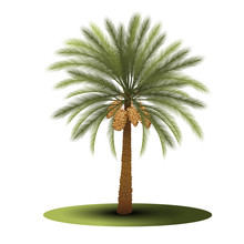 Palm Tree With Green Leaves An...