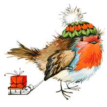 Christmas Bird Watercolor Illu...