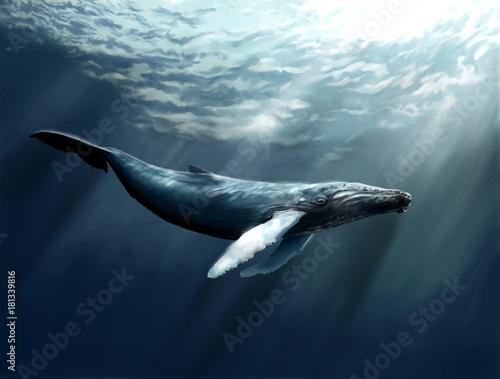 Fotografie, Obraz  graceful whale