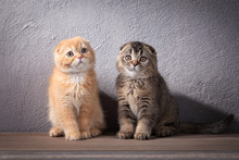 Cat. Several Scottish Fold Kittens On Wooden Table And Textured Background