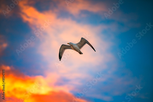 Flying seagull in sky with clouds at sunrise