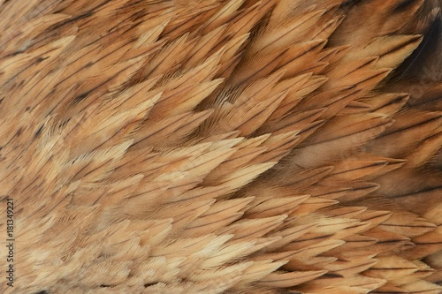 Photo Beautiful abstract background consisting of the feather Imperial eagle