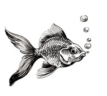 Ink Black And White Drawing Of A Gold Fish