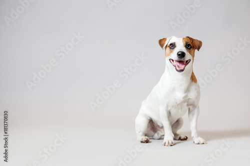 Fotobehang Hond Smiling dog at studio