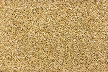 Brown Rice Groats Background, ...
