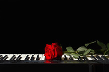 Rose On The Keys Of The Electr...