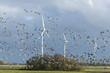 Leinwandbild Motiv Deutschland, Niedersachsen, Krummhörn,  Windenergieanlage.Weißwangengans (Branta leucopsis), auch als Nonnengans bezeichnet.