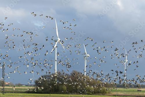Deutschland, Niedersachsen, Krummhörn,  Windenergieanlage.Weißwangengans (Branta leucopsis), auch als Nonnengans bezeichnet.
