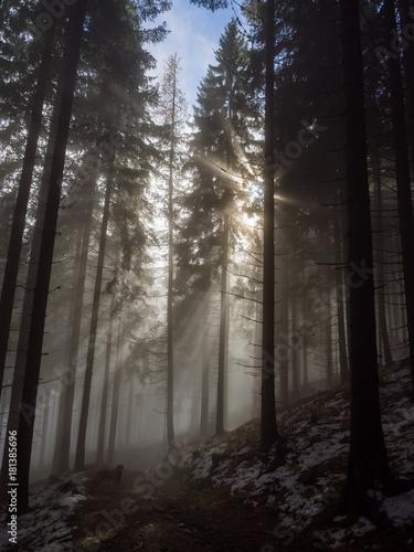 promienie-slonca-wpadajace-przez-mgle-do-ciemnego-gestego-lasu-swierkowego