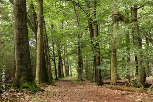 Weg door het bos Fototapeta