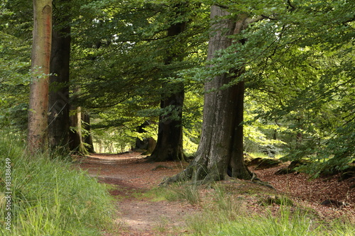 Fototapeten Natur Wandelen door het bos in de zomer