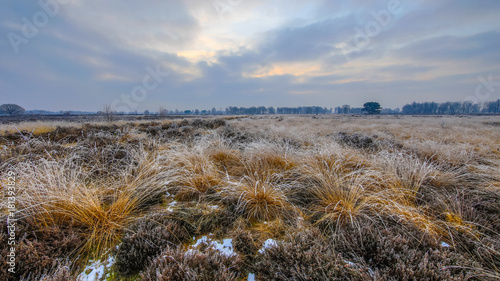 Obraz na plátne Winter morning sunrise over tussock sods