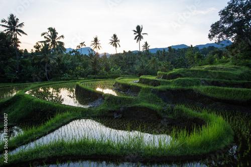 Aluminium Prints Rice fields Rice terraces at sunrise on Bali island, Indonesia