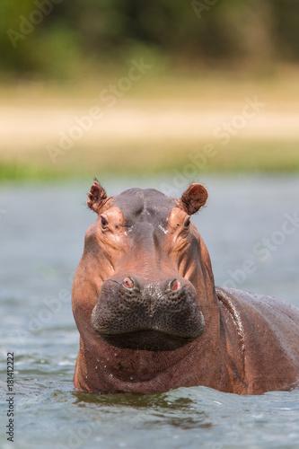 Photo ippopotamo uganda in acqua