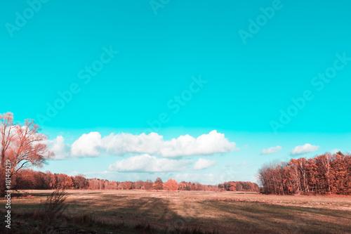 Foto op Canvas Turkoois Landschaft im Herbst mit Wiese und Wald