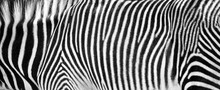 Zebra Print Black And White Ho...