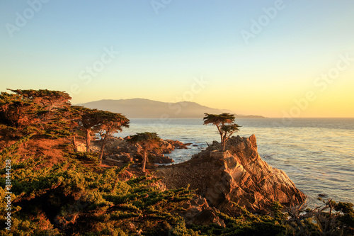 The lone cypress tree Fotobehang