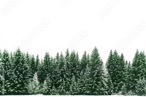 Spruce tree forest covered by fresh snow during Winter Christmas time Tapéta, Fotótapéta