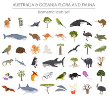 Isometric 3d Australia And Oceania Flora And Fauna Map Elements. Animals, Birds And Sea Life. Build Your Own Geography Infographics Collection