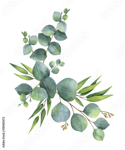 Plissee mit Motiv - Watercolor vector wreath with green eucalyptus leaves and branches. (von elenamedvedeva)