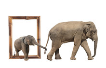 Family Of Elephant In Bamboo F...
