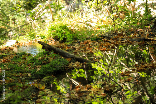 Poster Fantastique Paysage One log in a pond with fallen leaves