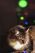 cat on the background of Christmas lights