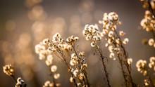 Autumn Flowers Meadow