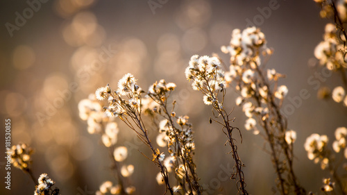 Fotografie, Tablou autumn flowers meadow