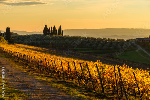 Canvastavla  Autumn vineyards in Tuscany, Chianti, Italy at sunset light