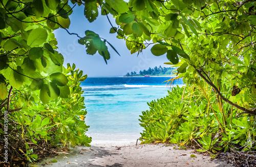 Foto op Canvas Olijfboom Tropical beach in Maldives.Tropical Paradise at Maldives with palms, sand and blue sky Untouched tropical beach in Maldives.Caribbean paradise