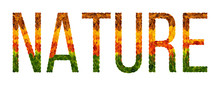 Word Nature Written With Leaves White Isolated Background, Banner For Printing, Creative Illustration Of Colored Leaves.