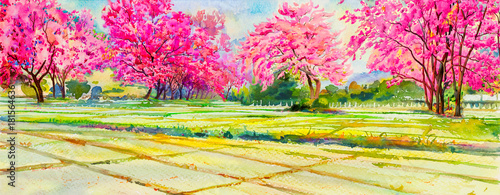 In de dag Candy roze Painting pink color of Wild himalayan cherry flowers