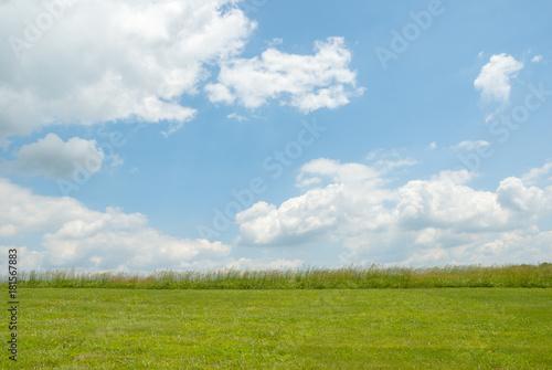 Carta da parati Summer Pasture