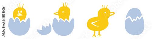 Foto Zeichnung: Osterküken schlüpfen aus Eiern / farbig, Vektor, freigestellt
