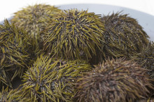 Sea Urchins On A Plate